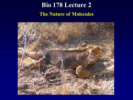 Bio 178 Lecture 2 The Nature of Molecules. Reading Chapter 2 Quiz Material Questions on P 34 Chapter 2 Quiz on Text Website (www.mhhe.com/raven7)