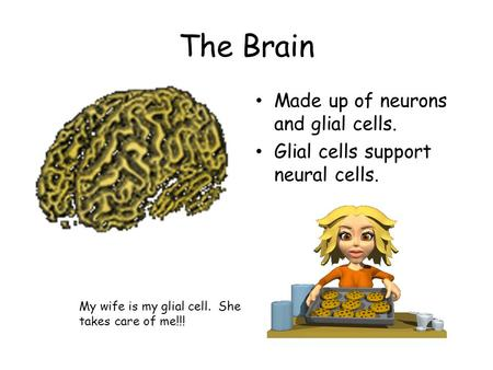 The Brain Made up of neurons and glial cells. Glial cells support neural cells. My wife is my glial cell. She takes care of me!!!