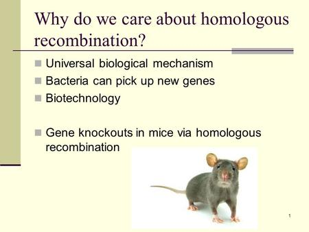 Why do we care about homologous recombination? Universal biological mechanism Bacteria can pick up new genes Biotechnology Gene knockouts in mice via homologous.