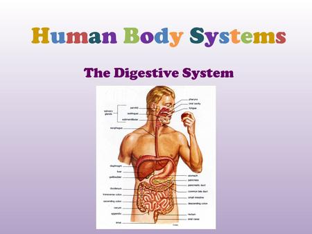 Human Body Systems The Digestive System.