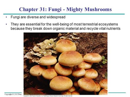 Copyright © 2005 Pearson Education, Inc. publishing as Benjamin Cummings Chapter 31: Fungi - Mighty Mushrooms Fungi are diverse and widespread They are.