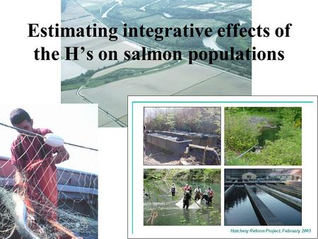 Estimating integrative effects of the H's on salmon populations.
