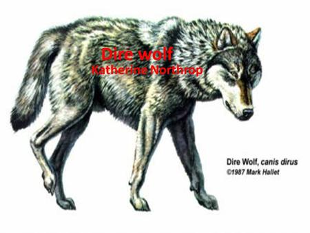 Dire wolf Katherine Northrop. Appearance The dire wolf had sharp teeth and short legs. Covering it's body was a thick cote of fur.