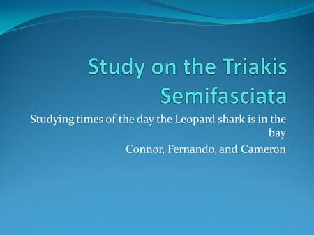 Studying times of the day the Leopard shark is in the bay Connor, Fernando, and Cameron.