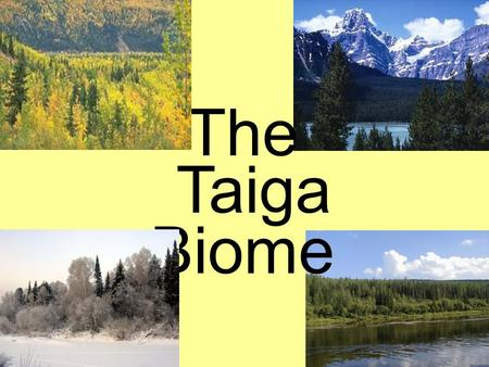 The Biome Taiga. General Information Temperature –Between -65° and 70°F –For half of the year, the average temperature is below freezing. Precipitation.