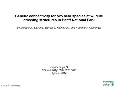 Genetic connectivity for two bear species at wildlife crossing structures in Banff National Park by Michael A. Sawaya, Steven T. Kalinowski, and Anthony.