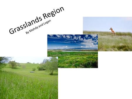 Grasslands Region By Mahdy and Logan Animal Life Grizzly bears and cougars roamed the grasslands. There were also large herds of Pronghorn antelope,