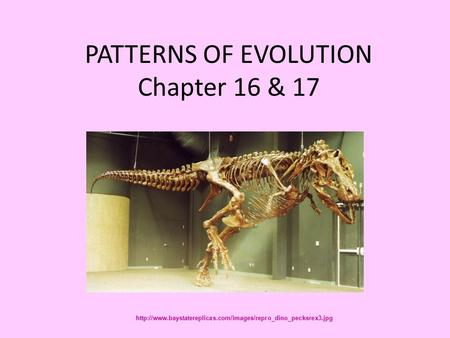 PATTERNS OF EVOLUTION Chapter 16 & 17
