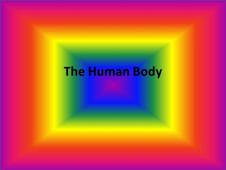 The Human Body Nervous System Tasting, smelling, seeing, hearing, thinking, dreaming, breathing, heart beating, moving, running, sleeping, laughing,