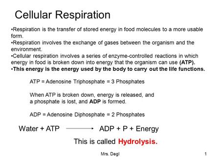 Mrs. Degl1 Cellular Respiration Respiration is the transfer of stored energy in food molecules to a more usable form. Respiration involves the exchange.
