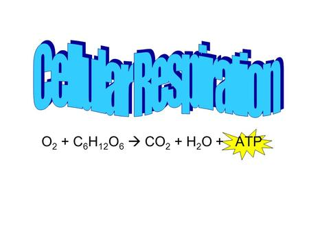 O 2 + C 6 H 12 O 6  CO 2 + H 2 O + ATP. What is it? The chemical pathway that provides living organisms with energy by breaking down foods The process.