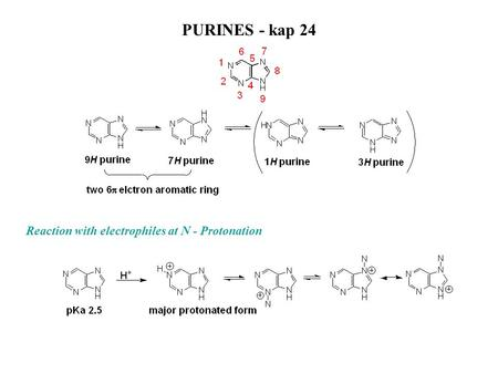 PURINES - kap 24 Reaction with electrophiles at N - Protonation.