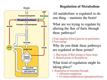 All metabolism is regulated to do one thing – maintain the brain! What are we trying to regulate by altering the flux of fuels through these pathways?