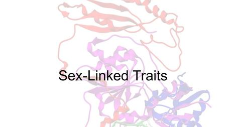 Sex-Linked Traits. A human cell contains over 6 billion nucleotide pairs in one diploid cell. If that were put into letters the size in your textbook.