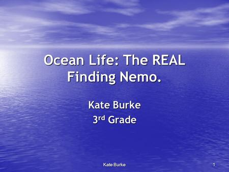 Ocean Life: The REAL Finding Nemo.