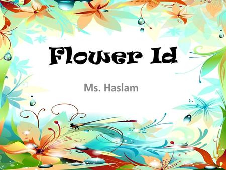 Flower Id Ms. Haslam. Flower ID #1 Bromeliad Tropical Colors Attract Mosquitoes Succulent House Plant.