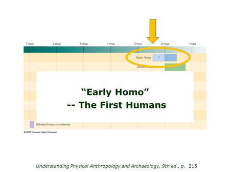 "Understanding Physical Anthropology and Archaeology, 9th ed., p. 215 ""Early Homo"" -- The First Humans."