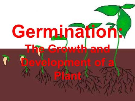 Germination: The Growth and Development of a Plant.
