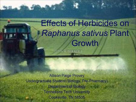 Effects of Herbicides on Raphanus sativus Plant Growth Allison Paige Provey Undergraduate Student (Biology, Pre-Pharmacy) Department of Biology Tennessee.