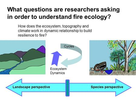 What questions are researchers asking in order to understand fire ecology? Landscape perspectiveSpecies perspective How does the ecosystem, topography.