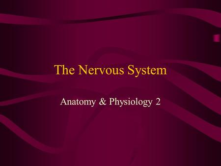 The Nervous System Anatomy & Physiology 2. Organization of the nervous System Central nervous system (CNS) – the brain and spinal cord –Interprets incoming.