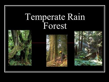 "Temperate Rain Forest. Temperate Rain Forest ""Old Growth Forest"" Climate Description Cool Humid and moist Moderate temperature Tree branches covered with."
