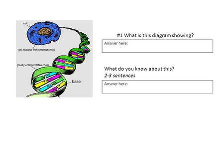 #1 What is this diagram showing? Answer here: What do you know about this? 2-3 sentences Answer here: