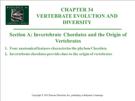 CHAPTER 34 VERTEBRATE EVOLUTION AND DIVERSITY Copyright © 2002 Pearson Education, Inc., publishing as Benjamin Cummings Section A: Invertebrate Chordates.