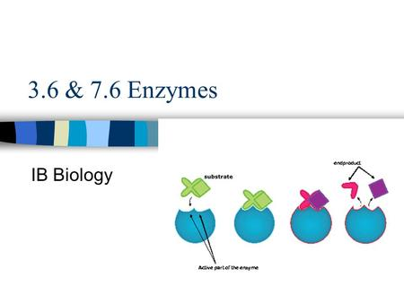 3.6 & 7.6 Enzymes IB Biology. Enzyme Globular protein Made by cells of living organisms –To help with reactions taking place in cells Catalyst - speed.