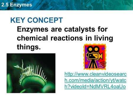2.5 Enzymes KEY CONCEPT Enzymes are catalysts for chemical reactions in living things.  h.com/media/action/yt/watc h?videoId=NdMVRL4oaUo.