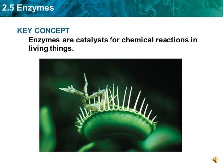 2.5 Enzymes KEY CONCEPT Enzymes are catalysts for chemical reactions in living things.