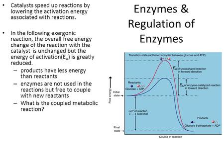 Enzymes & Regulation of Enzymes Catalysts speed up reactions by lowering the activation energy associated with reactions. In the following exergonic reaction,