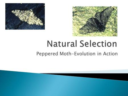 Peppered Moth-Evolution in Action.  Natural selection is the process by which favorable heritable traits become more common in successive generations.