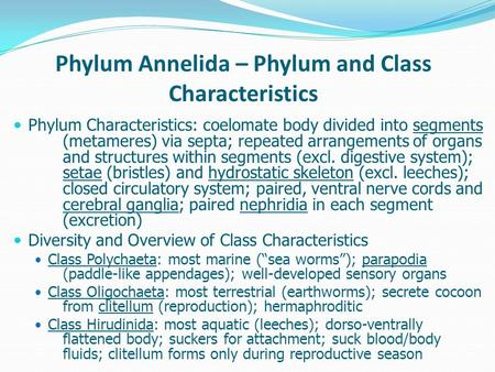 Phylum Annelida – Phylum and Class Characteristics Phylum Characteristics: coelomate body divided into segments (metameres) via septa; repeated arrangements.
