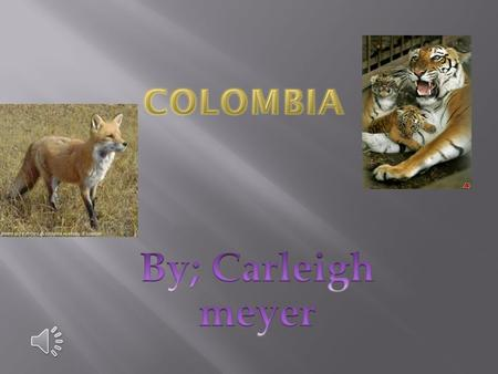 Colombia has many animals like Tigers Lions and even Bears!!!!! Colombia even has bats like a short-haired bat and Colombia has foxes and other animals.