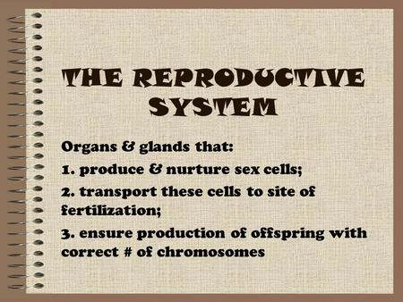 THE REPRODUCTIVE SYSTEM Organs & glands that: 1. produce & nurture sex cells; 2. transport these cells to site of fertilization; 3. ensure production of.