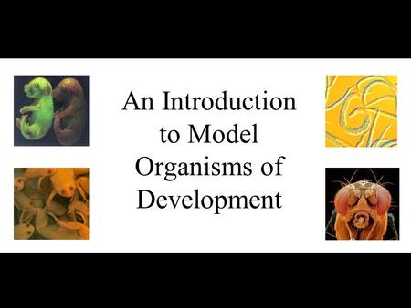 An Introduction to Model Organisms of Development.