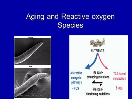 Aging and Reactive oxygen Species. Aging: What is it?  Aging, has been termed generally as a progressive decline in the ability of a physiological process.