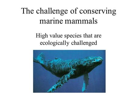 The challenge of conserving marine mammals High value species that are ecologically challenged.