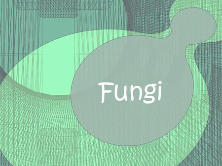 Fungi. Can be unicellular (yeasts) Can be multicellular (mushrooms) Eukaryotes Use spores to reproduce Heterotrophs Need moist, warm places to grow.