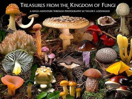 What are the characteristics of Fungi? Most Multicellular (except yeast: unicellular) Eukaryotes – cells contain a nucleus Heterotrophic – are consumers.