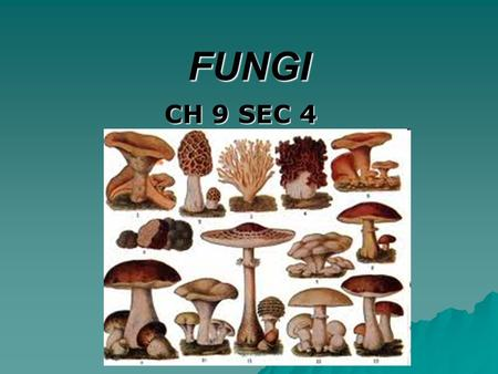 FUNGI CH 9 SEC 4 GOAL/PURPOSE  AFTER COMPLETING THE LESSON, STUDENTS WILL BE ABLE TO  NAME THE CHARACTERISTICS FUNGI SHARE  EXPLAIN HOW FUNGI REPRODUCE.