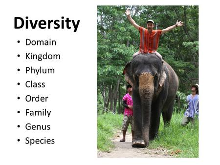 Diversity Domain Kingdom Phylum Class Order Family Genus Species.