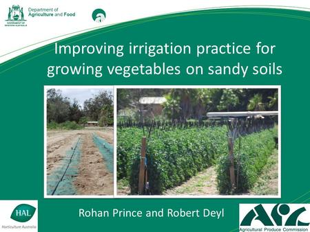 Improving irrigation practice for growing vegetables on sandy soils Rohan Prince and Robert Deyl.