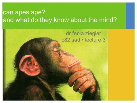 Can apes ape? and what do they know about the mind? dr fenja ziegler c82 sad lecture 3.