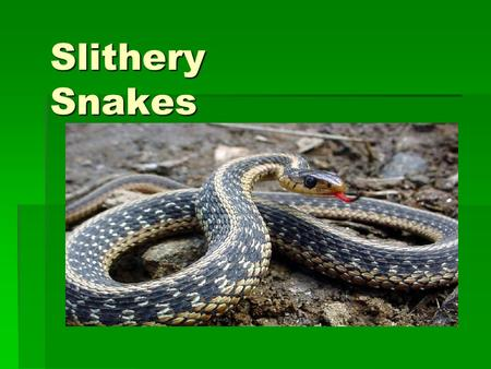 Slithery Snakes Vocabulary  Species- A group of animals or plants that have many characteristics in common.  Surroundings- The objects, influences.