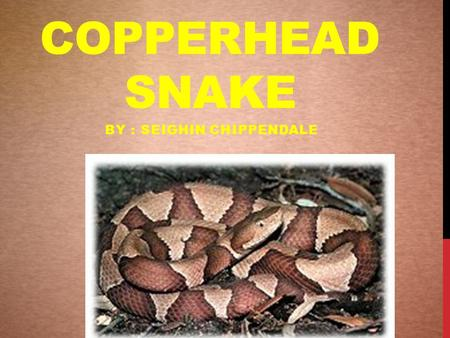 COPPERHEAD SNAKE BY : SEIGHIN CHIPPENDALE. COPPERHEAD DESCRIPTION  The copperhead snake has a very distinct look  They have a dark colored band across.