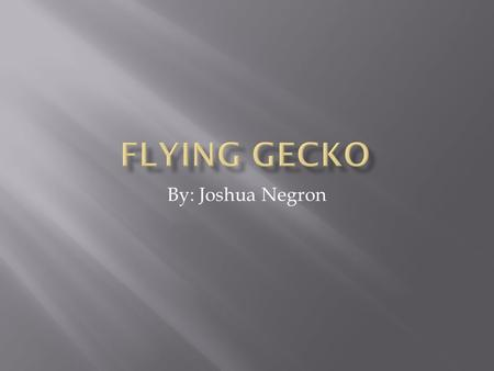 By: Joshua Negron.  The Flying Gecko lives in wet forests in Southeastern Asia.