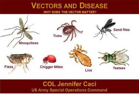 COL Jennifer Caci US Army Special Operations Command Mosquitoes Lice Ticks Sand flies Fleas Tsetses Chigger Mites WHY DOES THE VECTOR MATTER?