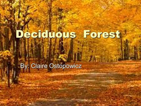 Deciduous Forest By: Claire Ostopowicz.  These forests are found in North America, Europe, and Asia.  The average temperature in deciduous forest is.